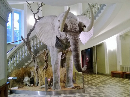 Don't miss out the elephant in the hall